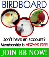 join-bird-board1.jpg